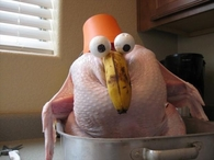 Shocked turkey