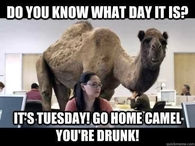 its tuesday drunk camel