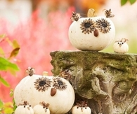 Cute Owl Pumpkins