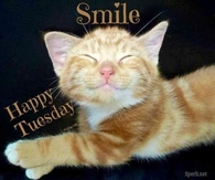 smile its tuesday