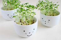 Plant cups with face