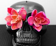 Skull succulents