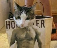 Hollister cat
