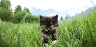 Kitten in the grass