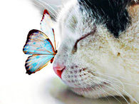 Butterfly on cat