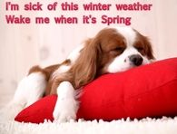 Wake me when its spring