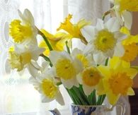 Daffodils in a Blue Pitcher