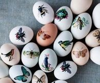 Exquisite eggs