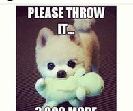 Please throw it 3000 more times