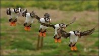 Awesome Synchronized Landing!!
