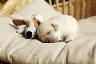 Dog and his Teddy