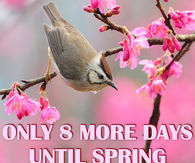 8 More Days Until Spring