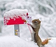 Cute Squirrel Getting His Mail