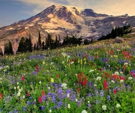 Paradise at Mount Rainier