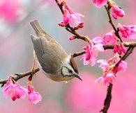 Bird in the Spring