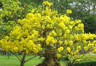 Pretty Tree with Yellow Flowers