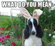 What do you mean Im not a bunny