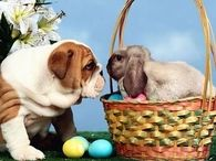 Easter Bunny and Dog