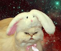 Angry Bunny Cat