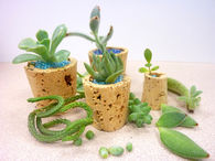 Cork Planters for Succulents