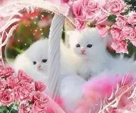 Pretty in Pink Kittens