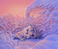 Wolf Cubs by Kirk Reinhert