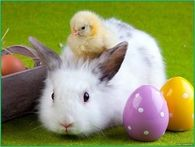 easter bunny chick and bunny