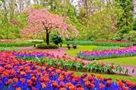 Colorful Landscaped Park