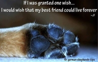 if I was granted one wish