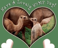 Have a Lovely Hump Day