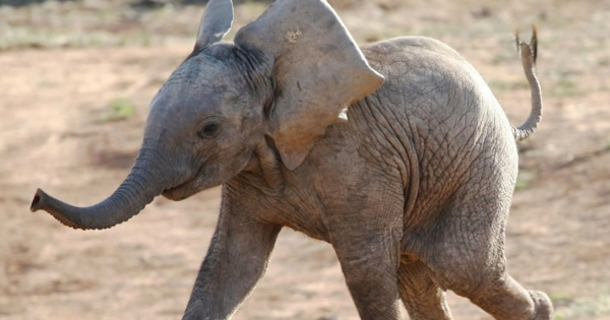 Most Funny and Cute Baby Elephant Videos