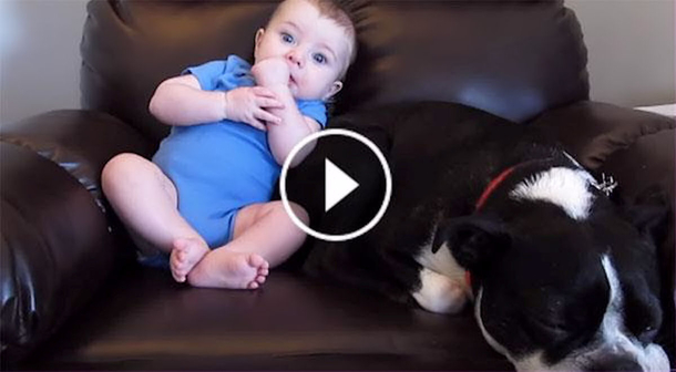 This Baby Poops His Pants And The Dog S Reaction Is Priceless